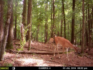 2014_REVIEWSAMPLE_MOULTRIE_A8_0013