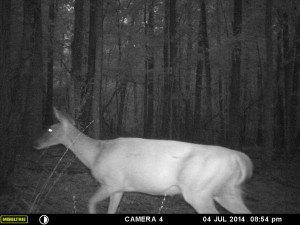 2014_REVIEWSAMPLE_MOULTRIE_A8_0014