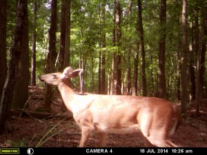 2014_REVIEWSAMPLE_MOULTRIE_A8_0015