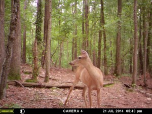 2014_REVIEWSAMPLE_MOULTRIE_A8_0016