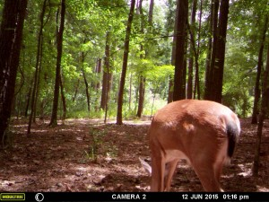 2015_REVIEWSAMPLE_MOULTRIE_A-7i_0017