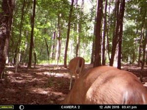 2015_REVIEWSAMPLE_MOULTRIE_A-7i_0029