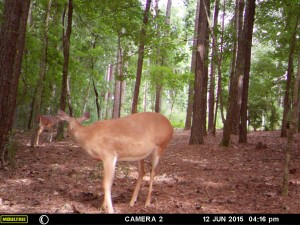 2015_REVIEWSAMPLE_MOULTRIE_A-7i_0038
