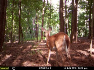 2015_REVIEWSAMPLE_MOULTRIE_A-7i_0065