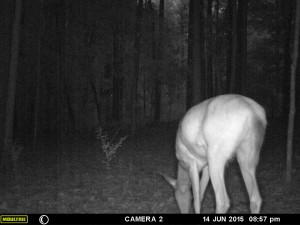 2015_REVIEWSAMPLE_MOULTRIE_A-7i_0071