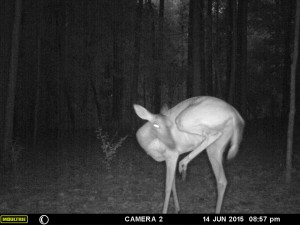 2015_REVIEWSAMPLE_MOULTRIE_A-7i_0072
