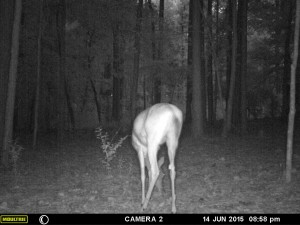 2015_REVIEWSAMPLE_MOULTRIE_A-7i_0073