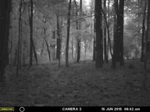 2015_REVIEWSAMPLE_MOULTRIE_A-7i_0080