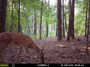 2015_REVIEWSAMPLE_MOULTRIE_A-7i_0085