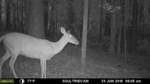 2015_REVIEWSAMPLE_MOULTRIE_M-880i-Gen2_0111