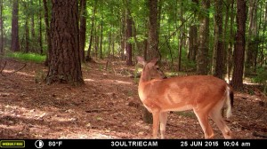 2015_REVIEWSAMPLE_MOULTRIE_M-880i-Gen2_0259