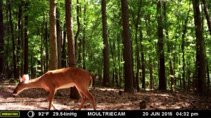 2015_REVIEWSAMPLE_MOULTRIE_M-990i-Gen2_0013