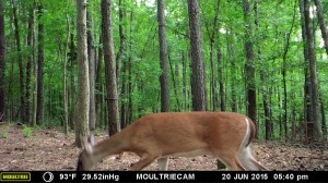 2015_REVIEWSAMPLE_MOULTRIE_M-990i-Gen2_0015
