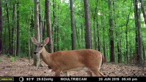 2015_REVIEWSAMPLE_MOULTRIE_M-990i-Gen2_0016