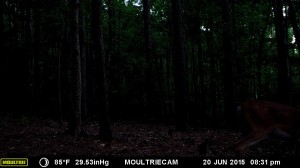 2015_REVIEWSAMPLE_MOULTRIE_M-990i-Gen2_0033