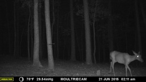 2015_REVIEWSAMPLE_MOULTRIE_M-990i-Gen2_0035