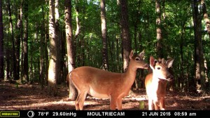 2015_REVIEWSAMPLE_MOULTRIE_M-990i-Gen2_0055