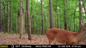 2015_REVIEWSAMPLE_MOULTRIE_M-990i-Gen2_0161