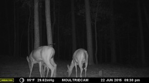 2015_REVIEWSAMPLE_MOULTRIE_M-990i-Gen2_0174