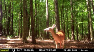 2015_REVIEWSAMPLE_MOULTRIE_M-990i-Gen2_0366