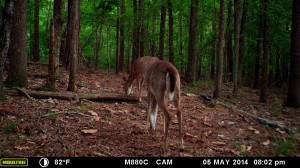 2014_REVIEWSAMPLE_MOULTRIE_M-880C_0035