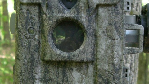 Moultrie M-880i Camera Review