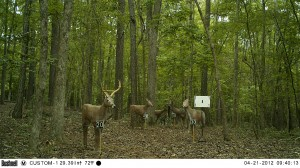 2012_REVIEWRANGE_BUSHNELL_TROPHYCAM-119476_0001
