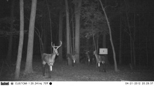 2012_REVIEWRANGE_BUSHNELL_TROPHYCAM-119476_0003
