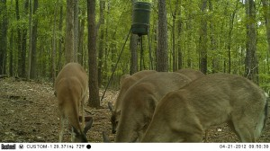 2012_REVIEWSAMPLE1_BUSHNELL_TROPHYCAM-119476_0004