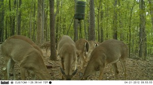 2012_REVIEWSAMPLE1_BUSHNELL_TROPHYCAM-119476_0006