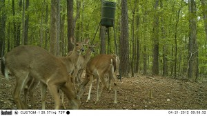 2012_REVIEWSAMPLE1_BUSHNELL_TROPHYCAM-119476_0009