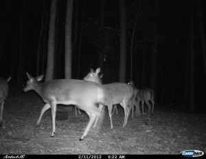 2012_REVIEWSAMPLE1_CUDDEBACK_AMBUSH_0004