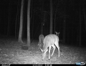 2012_REVIEWSAMPLE1_CUDDEBACK_AMBUSH_0005