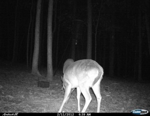 2012_REVIEWSAMPLE1_CUDDEBACK_AMBUSH_0006