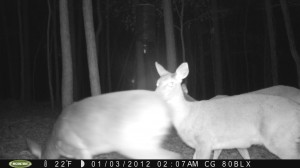 2012_REVIEWSAMPLE_MOULTRIE_M80BLX_0001