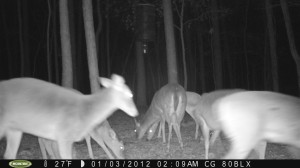 2012_REVIEWSAMPLE_MOULTRIE_M80BLX_0002