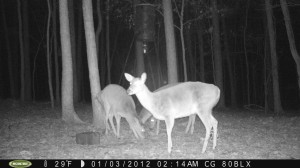 2012_REVIEWSAMPLE_MOULTRIE_M80BLX_0003