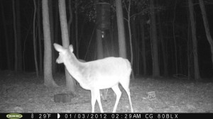 2012_REVIEWSAMPLE_MOULTRIE_M80BLX_0005
