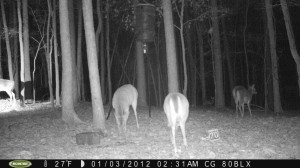 2012_REVIEWSAMPLE_MOULTRIE_M80BLX_0006