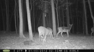 2012_REVIEWSAMPLE_MOULTRIE_M80BLX_0007