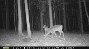 2012_REVIEWSAMPLE_MOULTRIE_M80BLX_0008
