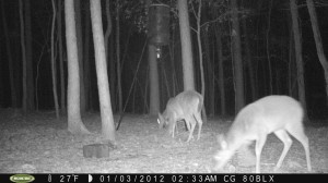 2012_REVIEWSAMPLE_MOULTRIE_M80BLX_0009