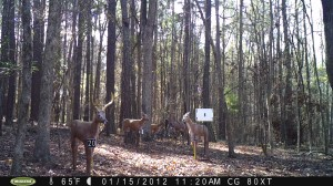 2012_REVIEWMEDIA_MOULTRIE_M80XT_Res_HIGH