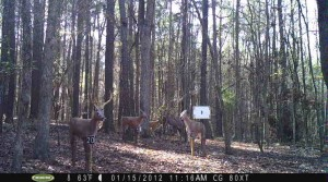 2012_REVIEWMEDIA_MOULTRIE_M80XT_Res_LOW