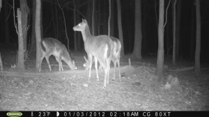 2012_REVIEWSAMPLE1_MOULTRIE_M80XT_0009
