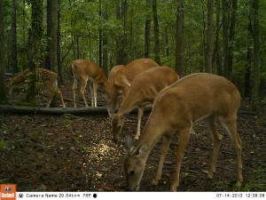 2013_REVIEWSAMPLE_BUSHNELL_TROPHYCAMHDMAX_0002
