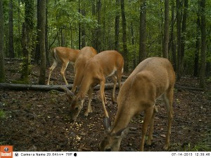 2013_REVIEWSAMPLE_BUSHNELL_TROPHYCAMHDMAX_0003