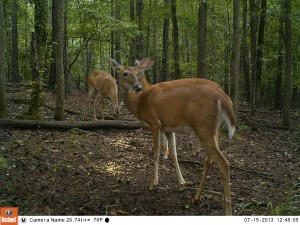 2013_REVIEWSAMPLE_BUSHNELL_TROPHYCAMHDMAX_0009