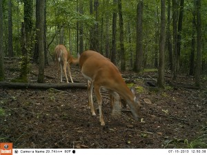 2013_REVIEWSAMPLE_BUSHNELL_TROPHYCAMHDMAX_0010