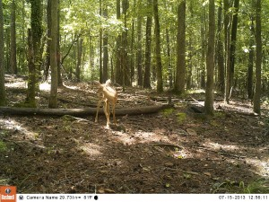 2013_REVIEWSAMPLE_BUSHNELL_TROPHYCAMHDMAX_0011